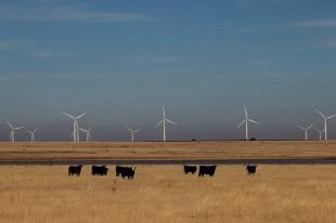 wildorado-wind-ranch